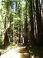 Armstrong Redwoods - Pioneer Trail.JPG