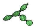 Asymmetric trinoid.png