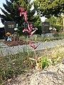 Atriplex hortensis sl12.jpg