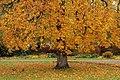 Autumn Sweden.JPG