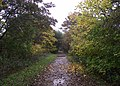 Autumn colours on the Biddulph Valley Way - geograph.org.uk - 2136218.jpg