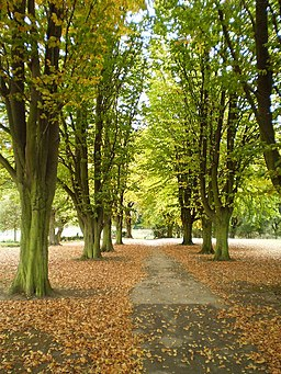 Autumn in Elsecar Park - geograph.org.uk - 1535475
