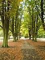 Autumn in Elsecar Park - geograph.org.uk - 1535475.jpg