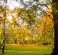 Autumn scene at Woodleigh (3 of 7).jpg