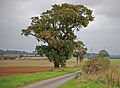 Autumnal Tree, Saxby All Saints.jpg