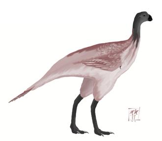 1981 in paleontology - Avimimus