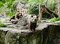 Bären im Zoo Berlin.jpg
