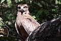 BIRDS - 0030.jpg