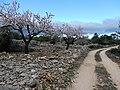 Barranco del Cao hike (26848689631).jpg