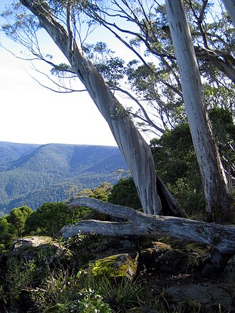 Barrington Tops National Park - The view from Captain Thunderbolt's lookout over Barrington Tops
