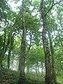 Barro bosque - panoramio - Frank Baulo.jpg