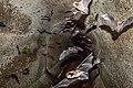 Bat Experience (16656599992).jpg
