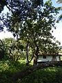 Batangasjf8549 25.JPG