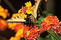 Bee DSC08435.jpg