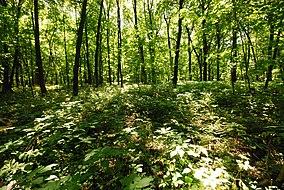 Belmont Mound State Park.jpg