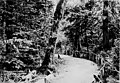 Bend in the path with bicycle in distance, Seattle, between 1897 and 1900 (SEATTLE 5906).jpg
