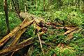 Bialowieza National Park in Poland0012.JPG