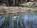 Big Bird in a Small Pond - geograph.org.uk - 713965.jpg