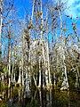 Big Cypress National Preserve SR 94 - Loop Road.jpg
