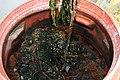 BioFilter with porous gravel.jpg