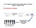 Bio luminescence Imaging.pdf