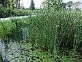 Biotope, lotus - panoramio.jpg