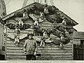 Bird-lore (1909) (14563052639).jpg