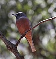 Bird 2 (30760412082).jpg