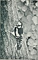 Bird notes (1913) (14563393779).jpg