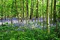 Bisham Woods (27165847935).jpg