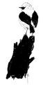 Blonde tapuit Oenanthe hispanica Jos Zwarts.tif