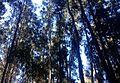 Blue Poles^ (Almost^) - panoramio.jpg
