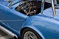 Blue Racer (6113288290).jpg