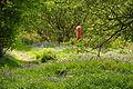 Bluebells by Venford Reservoir (4279).jpg