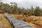 Boardwalk on Sabine Speargrass Track, Nelson Lakes National Park, New Zealand.jpg