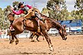 Boddington Rodeo 2015 (128247531).jpeg
