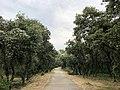 Bois de Montmaur (42857745324).jpg