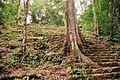 Bonampak Mayan Ruins - panoramio.jpg