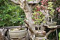 Bonsai plants.jpg