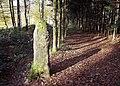 Borne Saint-Desle appeée menhir de Chagey., (4).jpg