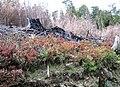 Bosque valdiviano-roce y quema-2.jpg