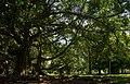 Botanical Garden of Peradeniya, 2015-04-05.jpg