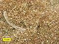 BrassfieldEncrinite042112.jpg
