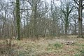 Brickles Wood - geograph.org.uk - 642184.jpg