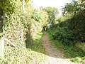 Bridleway branching off from Catherington Lane - geograph.org.uk - 1011139.jpg