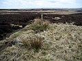 Bridleway north of Bulman's Rigg - geograph.org.uk - 1138489.jpg