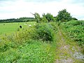 Bridleway to Monmouth - geograph.org.uk - 1404193.jpg