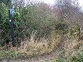 Bridleway to West Dean Farm - geograph.org.uk - 1053089.jpg