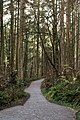 Bright Path, Hendricks Park.jpg