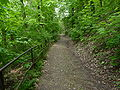 Brno, Wilsonův les (6).JPG
